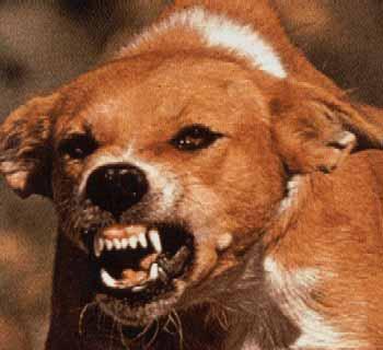علائم بیماری هاری در انسان و حیوانات